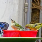 Birds that Make Mexico their Second (or Third) Home